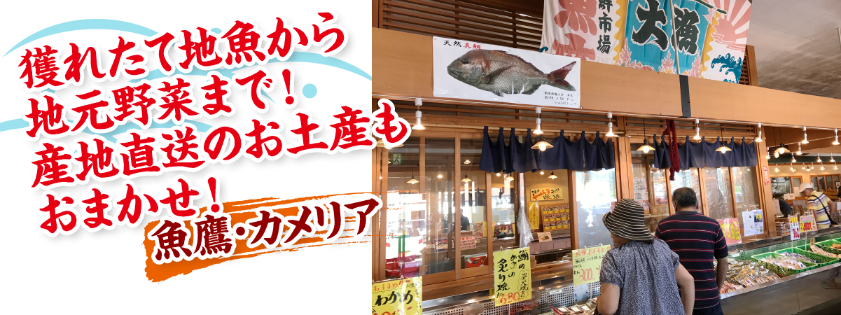 魚鷹・カメリア
